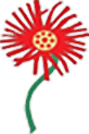 North Gauteng Daisy